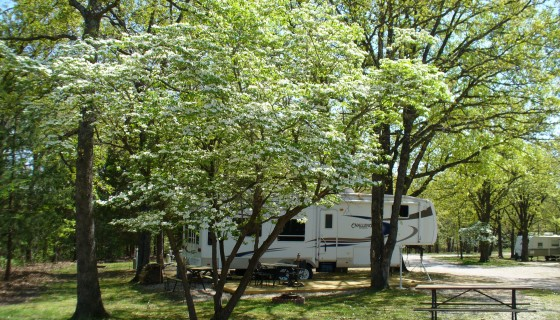 Beautiful treed sites at Osage Beach RV Park